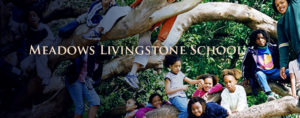 meadows-livingstone-banner-1140x450